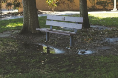 Rebecca Grant/The Runner Runoff water from CSUB's sprinkler system is shown near the Walter Stiern Library