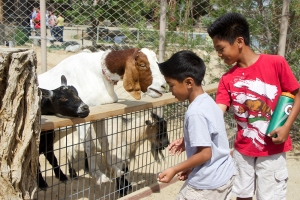 Aaron and Andre Carino enjoyed feeding the goats and all the other animals inside the Children's Park at CALM as the park celebrated Spring Fling on Apr. 18, 2014.