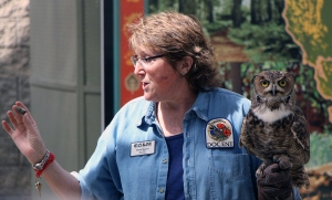 Terri Hayes, a CALM employee, educates the public about owls during their spring fling event on Apr. 18, 2014.